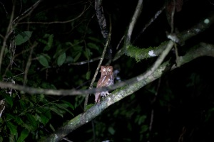 The owl we saw on our night hike