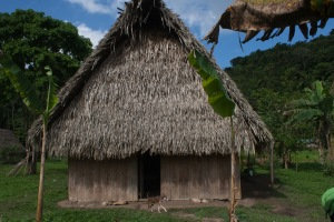Herlado's house, with Cohune Palm thatch (and Blue Eyes the dog in front).