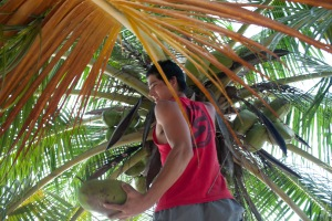 Matt successfully climbing a palm tree for a coconut